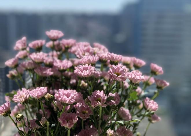 春天花会开| Spring is coming