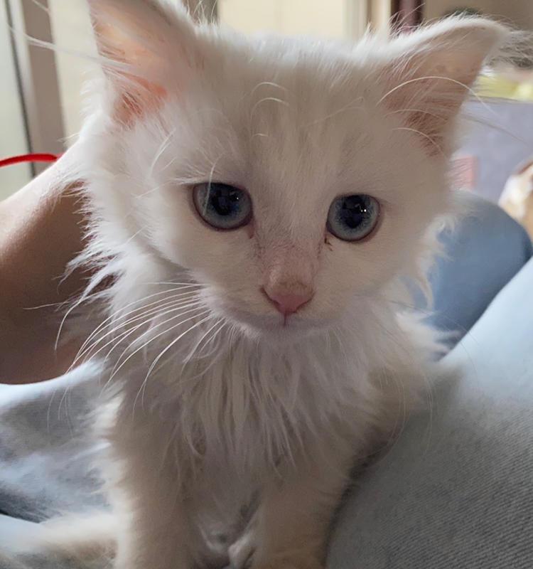 小猫猫找领养叻 | Cats adoption