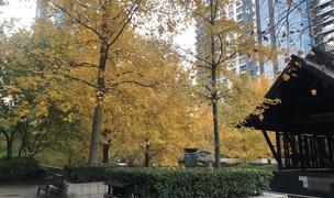 Beijing-Chaoyang-Single Apartment,🏠