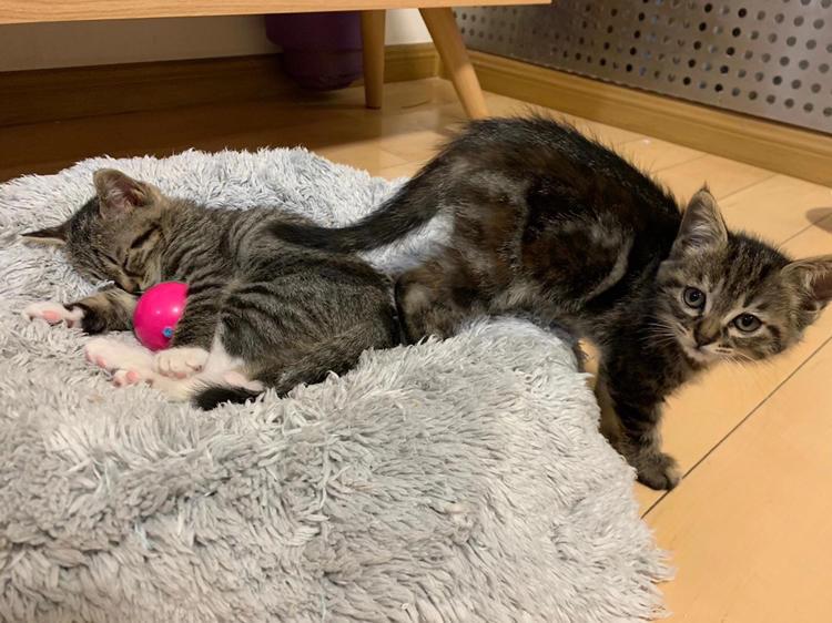 Miao~ Please adopt me!