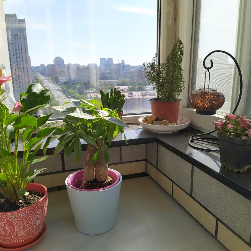 Beijing-Haidian-Sublet,Short Term,Shared Apartment,Replacement