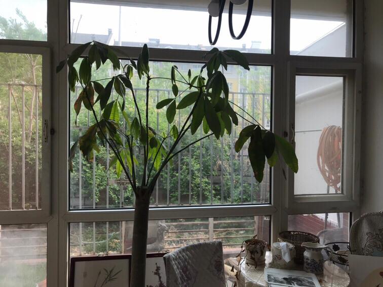 Beijing-Fengtai-studio,Long & Short Term,LGBT Friendly 🏳️🌈,Pet Friendly,Short Term,Single Apartment