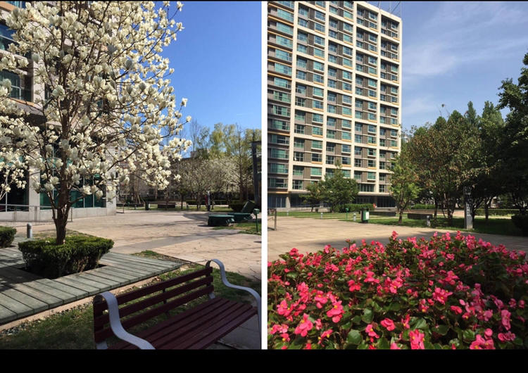 Beijing-Dongcheng-Single Apartment,Long & Short Term,🏠