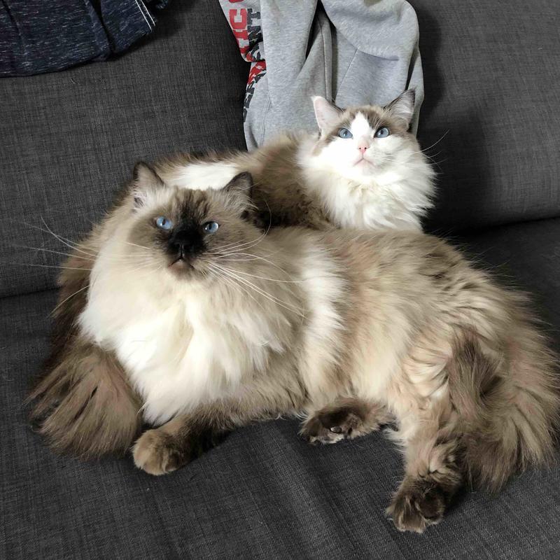Beijing-Chaoyang-Cat Lover,Pet Friendly,Seeking Flatmate,Long & Short Term