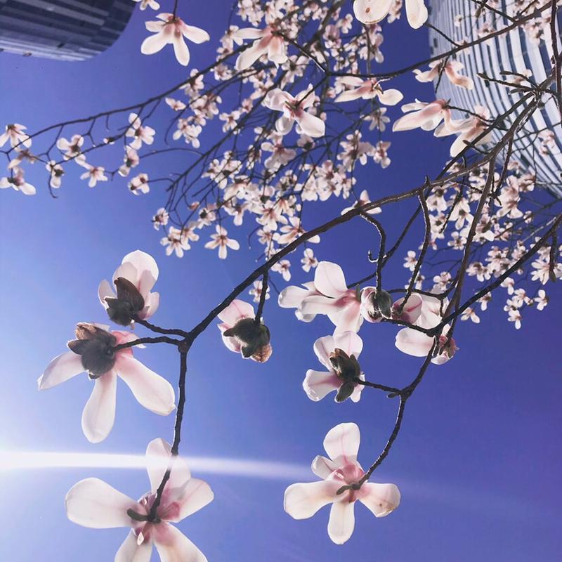Beijing-Chaoyang-Line 2/6/10,Sanlitun,Long & Short Term,Short Term,Seeking Flatmate,Shared Apartment,Pet Friendly