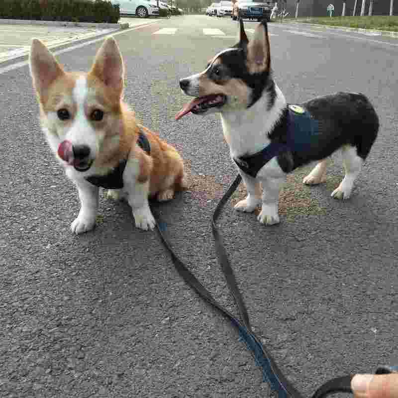 Beijing-Changping-Pet Friendly,Seeking Flatmate