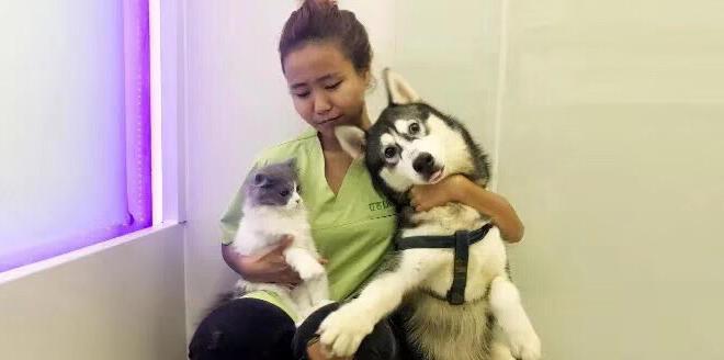 Providing Bilingual Veterinarian Pet Sitting During CNY.