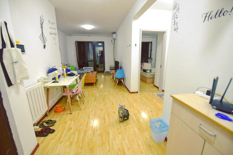Beijing-Chaoyang-Cat Lover 🐈,Shared Apartment,Seeking Flatmate,👯‍♀️