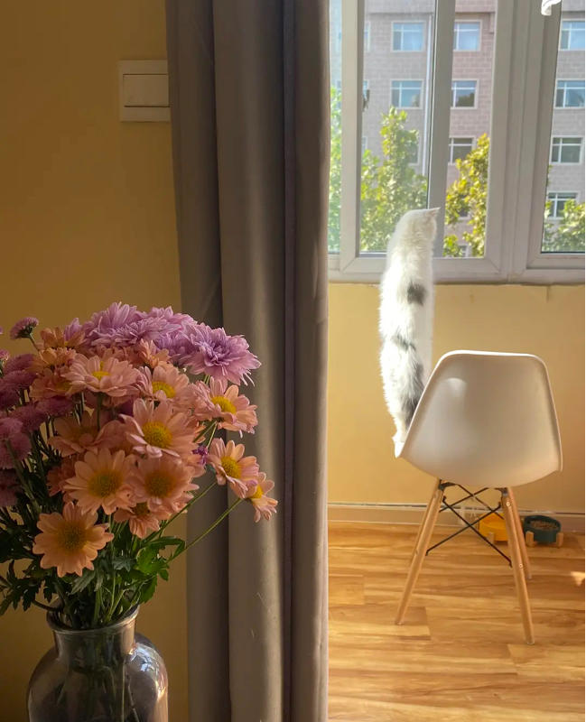 Beijing-Chaoyang-Line 2,Sublet,Shared Apartment,LGBT Friendly 🏳️🌈,Pet Friendly,👯♀️