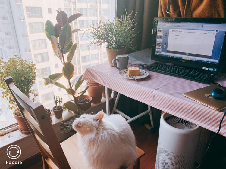 Beijing-Xicheng-Line 7,Long & Short Term,Replacement,Single Apartment,LGBT Friendly 🏳️🌈,Pet Friendly