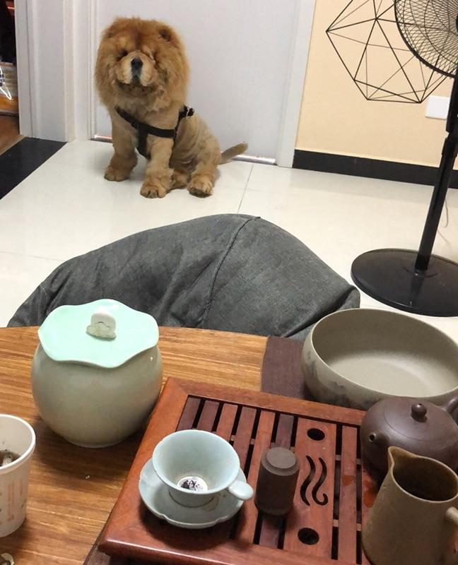 Beijing-Chaoyang-Pet Friendly,Seeking Flatmate