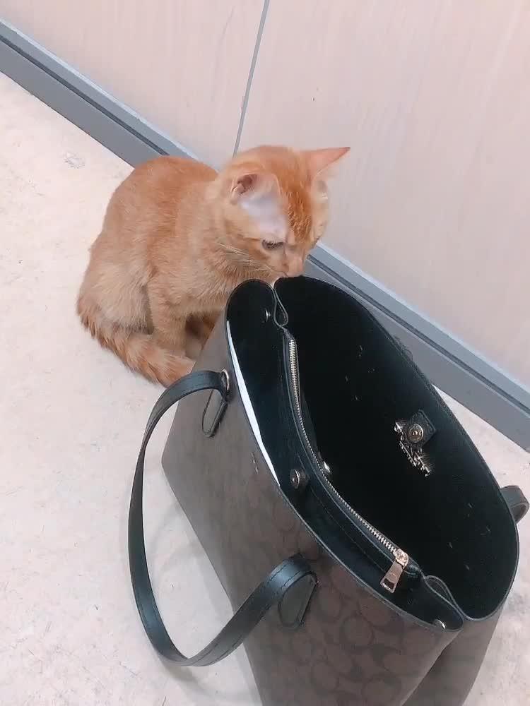 My Take - cat - to -work Day 带猫🐱上班日٩(˃̶͈̀௰˂̶͈́)و