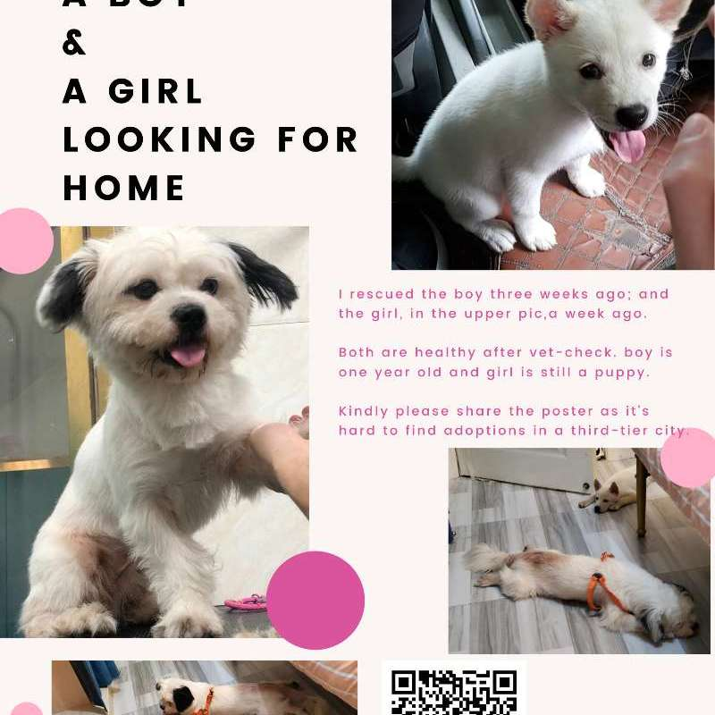 Two Cuties Looking for Home
