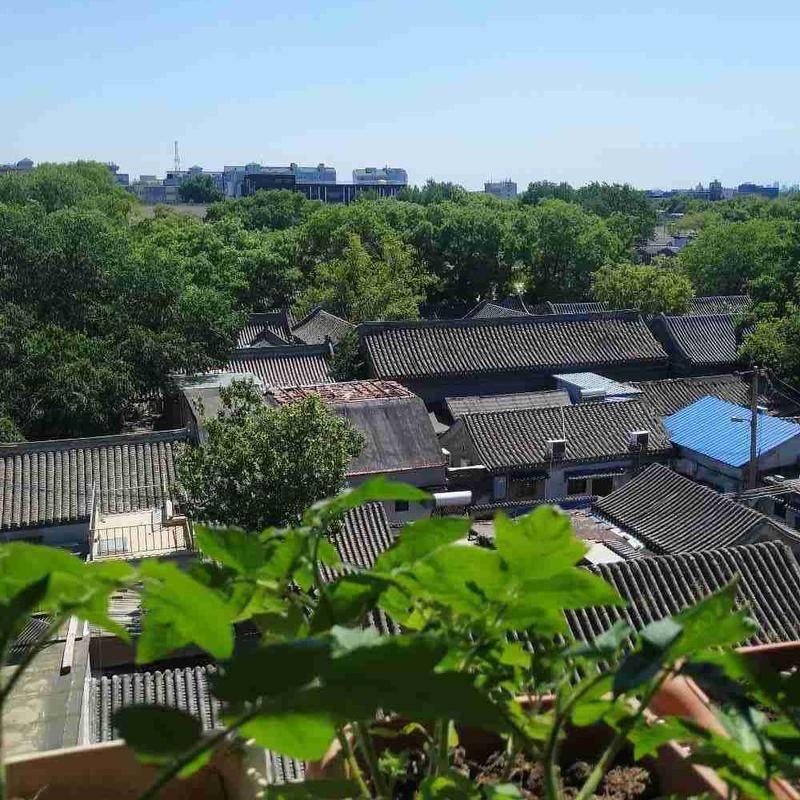 Beijing-Dongcheng-Long & Short Term,Pet Friendly,Shared Apartment,LGBT Friendly 🏳️🌈,Seeking Flatmate